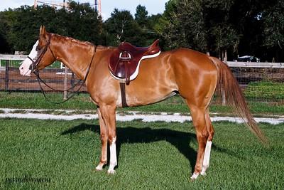 Kate Horses