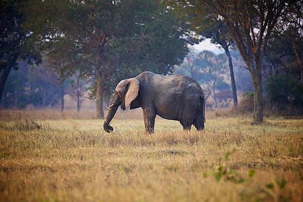 Day 09 Safari