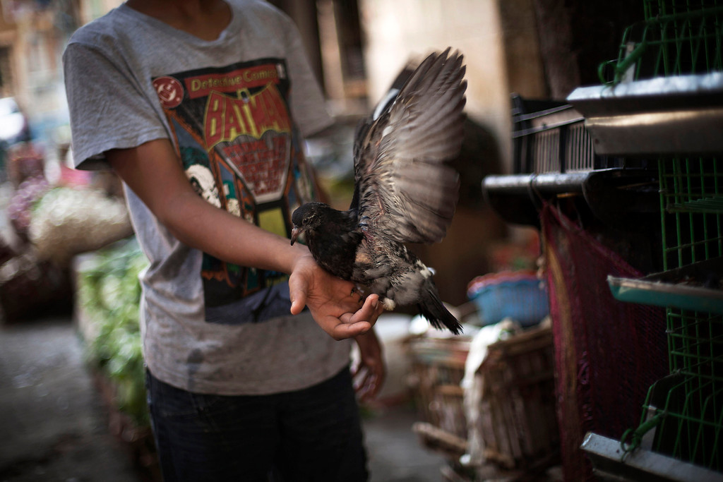 . An Egyptian vendor holds a pigeon in front of his shop in Suleiman Gohar market in Dokki district in Cairo, Egypt, Monday, Aug. 26, 2013. Egypt\'s recent turmoil has scared away tourists and affected the livelihood of the one in eight Egyptians who earn their living from tourism. An evening curfew imposed by the military to quell protests has further choked many businesses, such as restaurants, stores and entertainment venues, serving another blow to the country\'s already battered economy. (AP Photo/Manu Brabo)