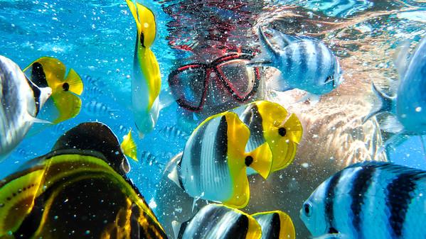 TransPacific Cruise 2014