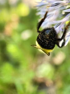Neighborhood Bees
