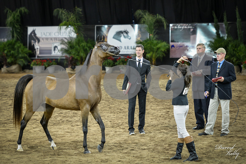 Class 35 Champ Mare AOTH