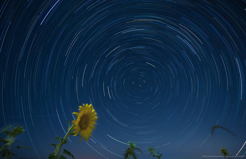 Pennsylvania Sunflower Star Trails_.jpg