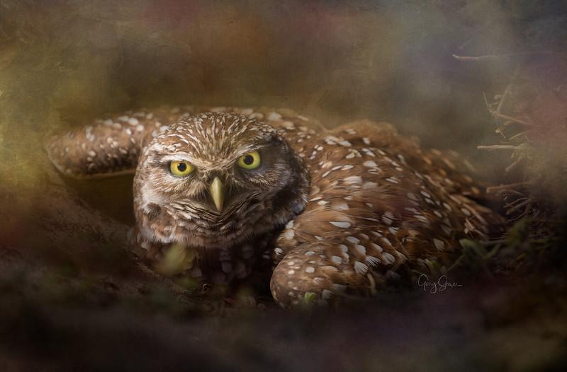 Curious Owl final WS.jpg