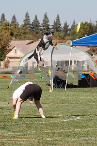 Disc Dogs Championship