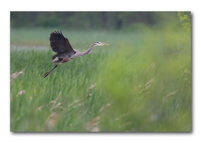 Great Meadows Wildlife Refuge