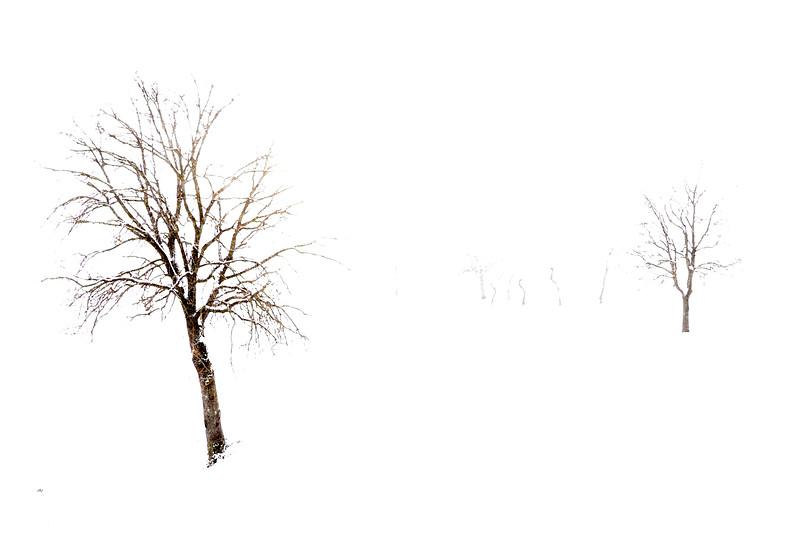 Winter Trees - Via Monte Evangelo, Castellarano, Reggio Emilia, Italy - February 12, 2012