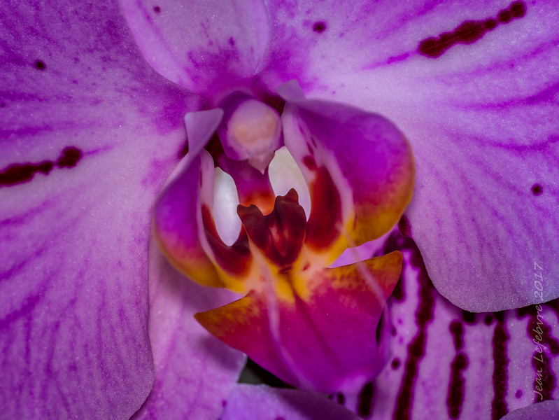 20171118-OrchidMacro-031of031-HDR