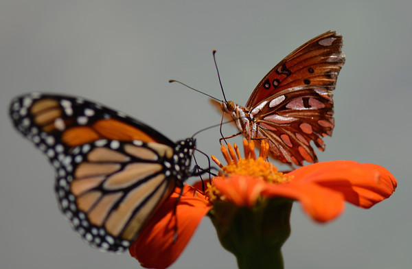 Butterfly Farms 7.25.15