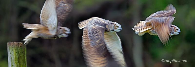 sm 8 owl combo_M4D7239.jpg