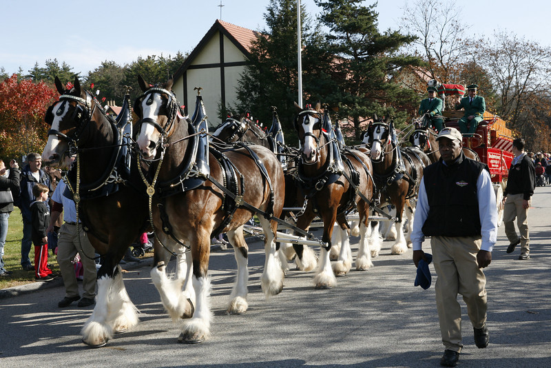 The famous Budweiser Clydesdales. It was cool to see these horses up close. They are much larger than you might realize.