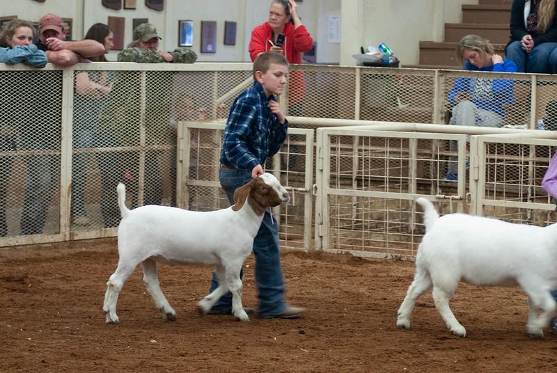 20190105_eosc_goats_showmanship-and-does446.jpg
