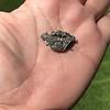 1.52ctw Victorian Diamond Crown Motif Clasp 10