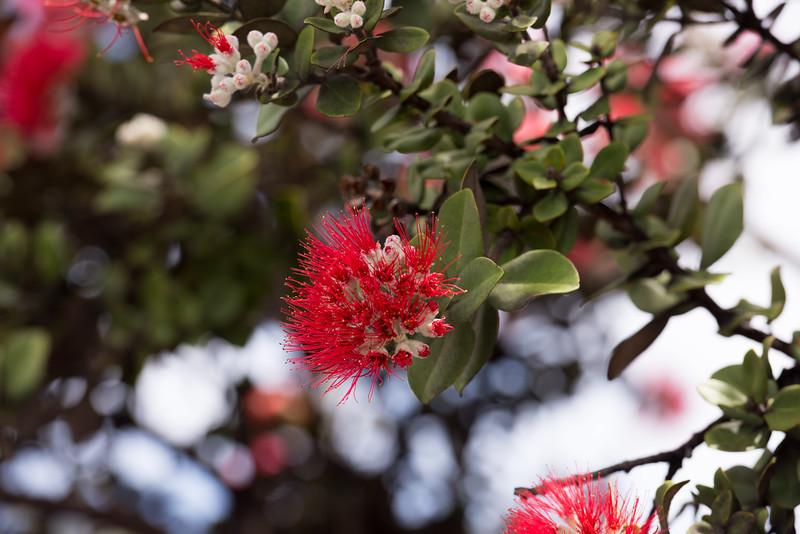 Summit Flower 2