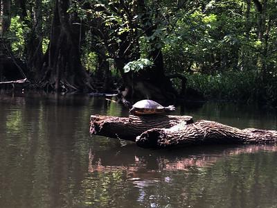 Florida Nature 2021
