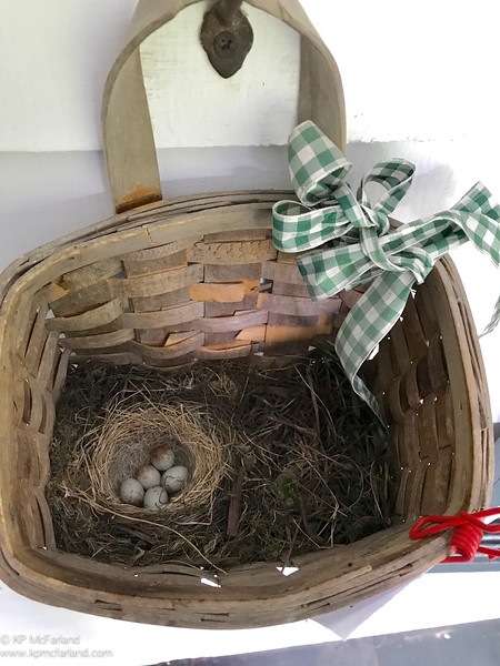 Slate-colored Junco nest on porch