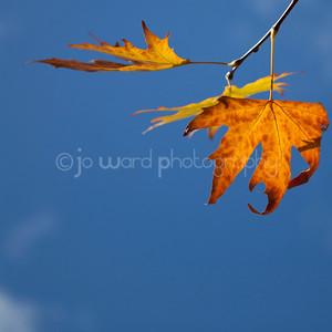 Autumn in Margaret River