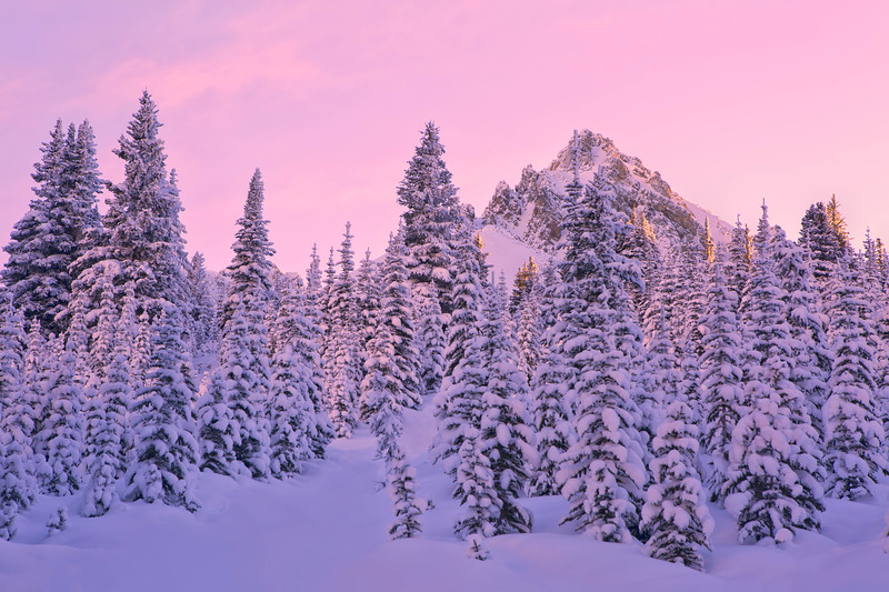 Alpenglow in the Canadian Rocky Mountains, Banff National Park