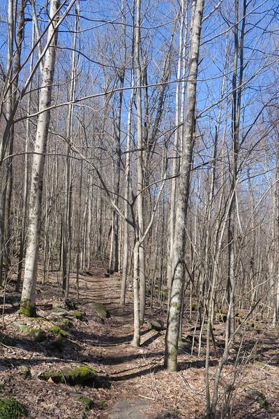 Trombatore Trail - 3,130'