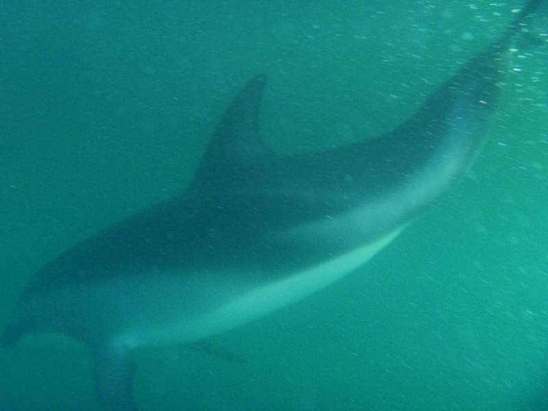DolphinSwim_2_blog.jpg