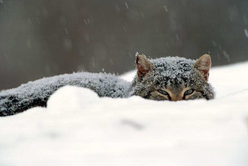 Hiding In The Snow