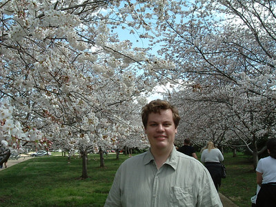 cherry blossom 2009