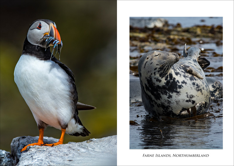 Farne Islands 2 image set.jpg