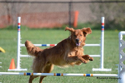 DTCCU AKC Agility Trials - April 26-27 2014
