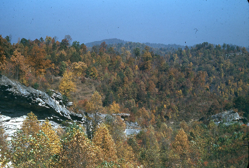 1950 - Autumn Scene
