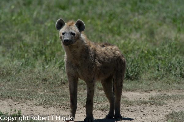 Tanzania-Serengeti Day 3