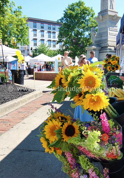 Easton Farmers' Market June Bee Jamboree 6/24/17