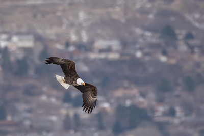 Vultures, Eagles, and Hawks