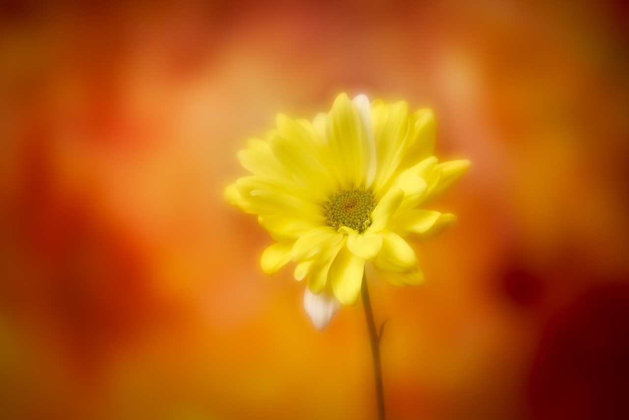 IMAGE: https://photos.smugmug.com/photos/i-t5DwktK/0/c58d29c4/X2/i-t5DwktK-X2.jpg