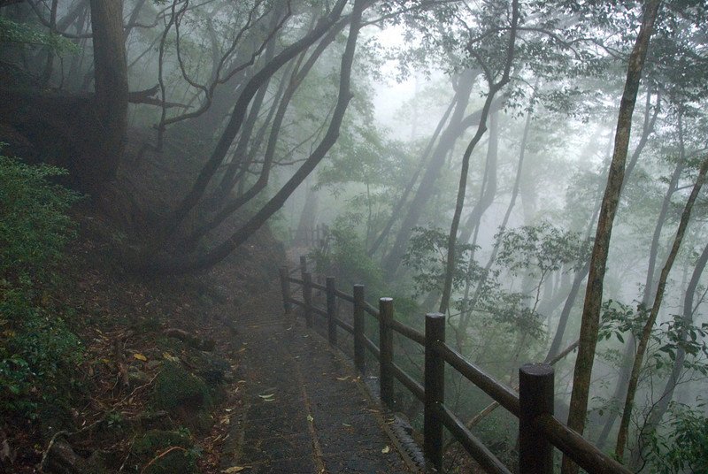 Fogs covering The Yakusugi Cedar Grove in Yakushima, Japan