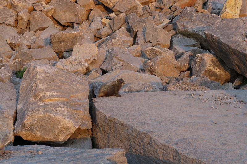 Sunset Lake at sunset - marmots like it too!
