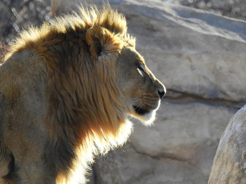Denver Zoo 2018 (2646).JPG