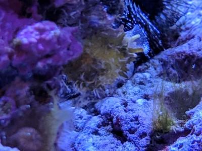 2018-11-02 - Reef Tank update