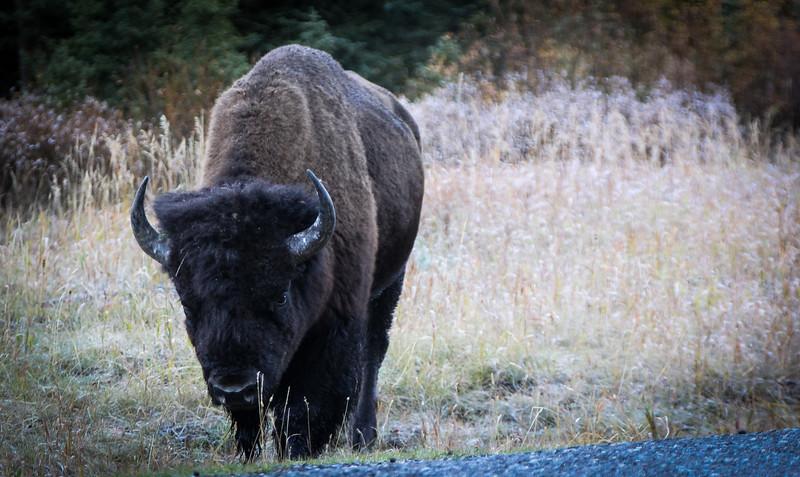 Fall Trip Wyoming & Montana 2016 (37 of 193).jpg