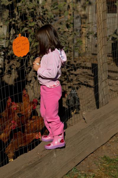 PumpkinPatch2012-27.jpg