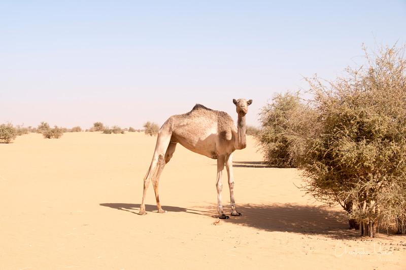 2-2-17228588Meroe-Bayuda Desert-Karima.jpg
