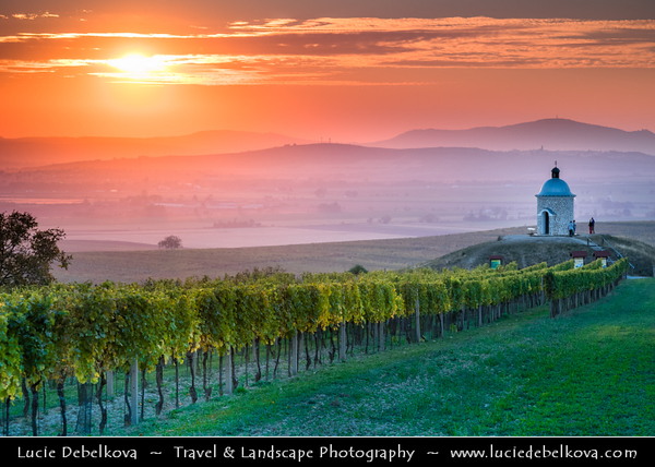 Czech Republic - Moravian Vineyards