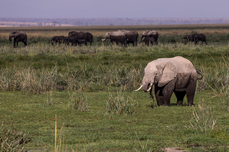 kenya-amboseli-national-park-elephant-group-27.jpg