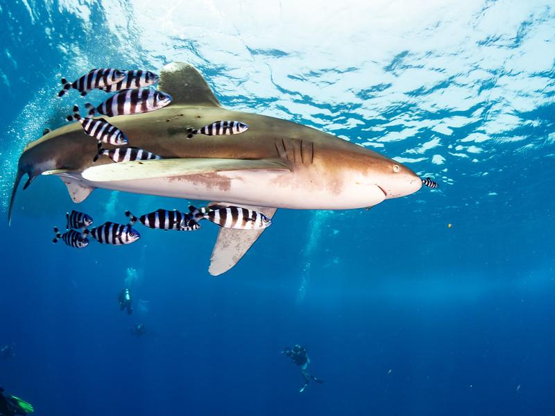 SharkQuest_29Jun18_0405.jpg