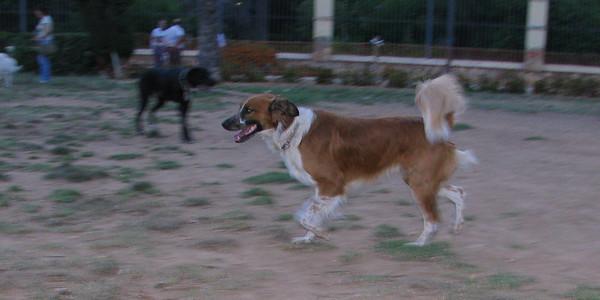 06  -  13  -  2010 Ayora Dog Park