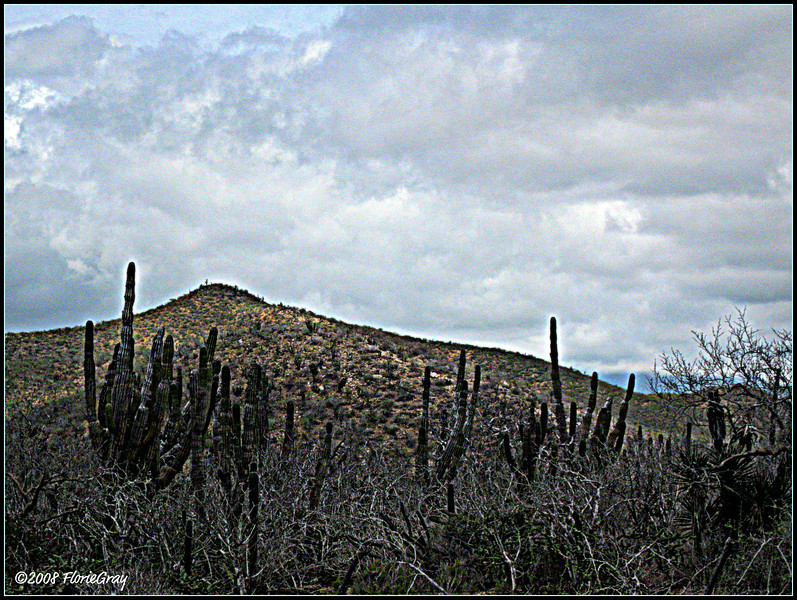 Cacti and Clouds:  Perfect Together 