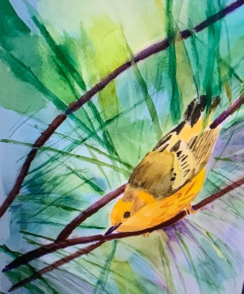Yellow Warbler Ready to Go by Deming Payne
