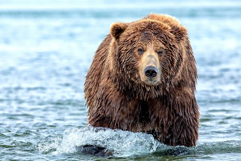 Alaska_2013_IG3A5033.jpg