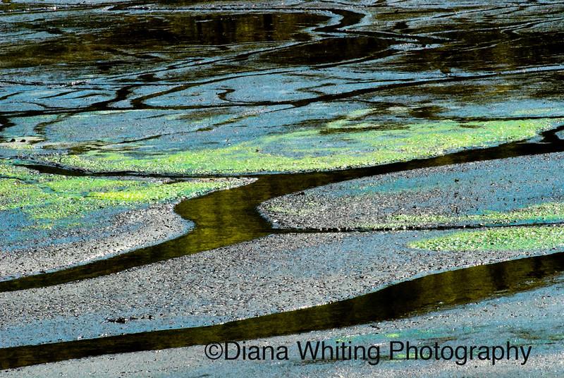 Wetlands Abstract.jpg