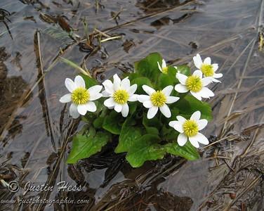 Nymph, Dream, Emerald Lakes Hike 7-7-2011
