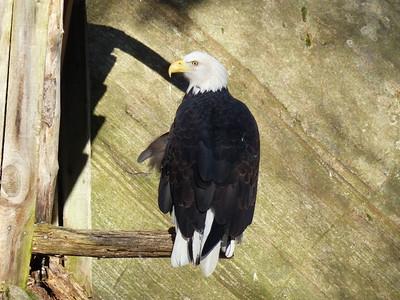 20121124 Muskoka Wildlife Centre